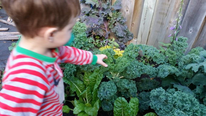 3 Yr Reaches for Kale